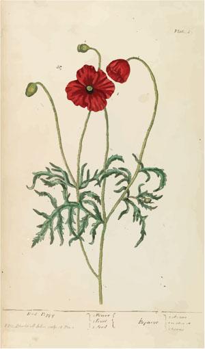 A curious herbal Elisabeth Blackwell, John Norse, Samuel Harding 1737